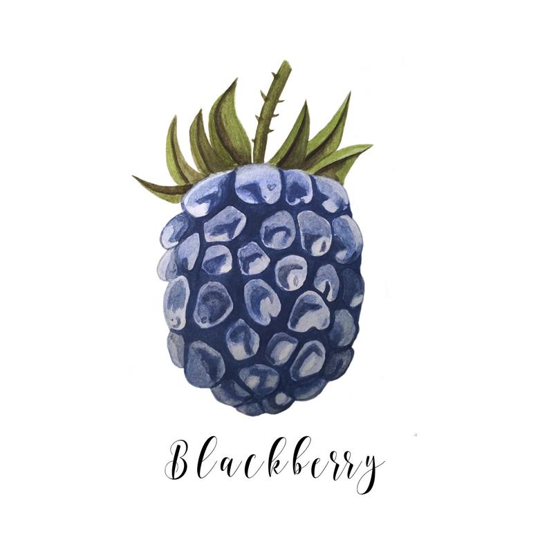 Watercolor Blackberry Clipart, Blackberry ClipArt, Blackberry Illustration,  Fruits Digital PNG, Watercolor Вerry , Watercolor Clipart.