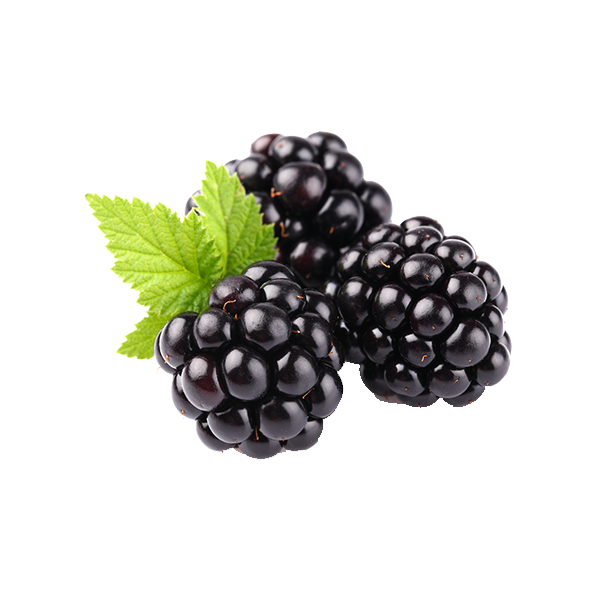 Download Free png Blackberry Fruit PNG Clipart.