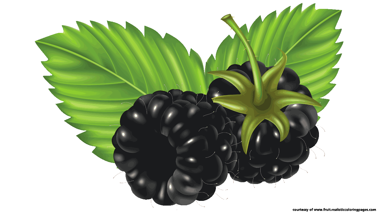 Free 7 Awesome Blackberry Fruit Clipart.