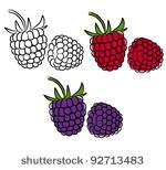 Blackberry Fruit Free Vector Art.