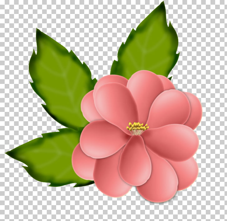 Flower Drawing, Blumen PNG clipart.