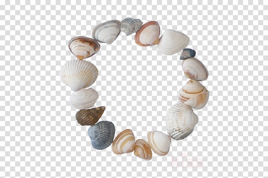 shell bracelet jewellery bead clam clipart.