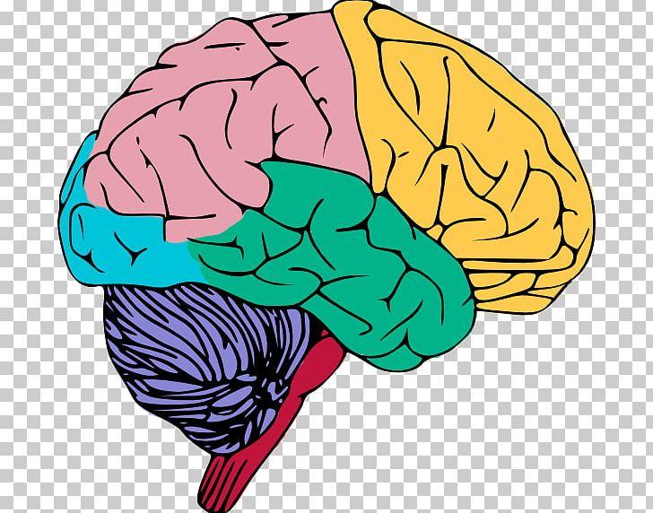 Human Brain Free Content Public Domain PNG, Clipart, Blog.