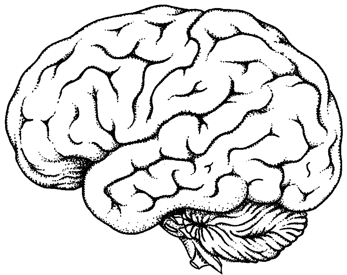 Brain Outline Clipart Black And White.