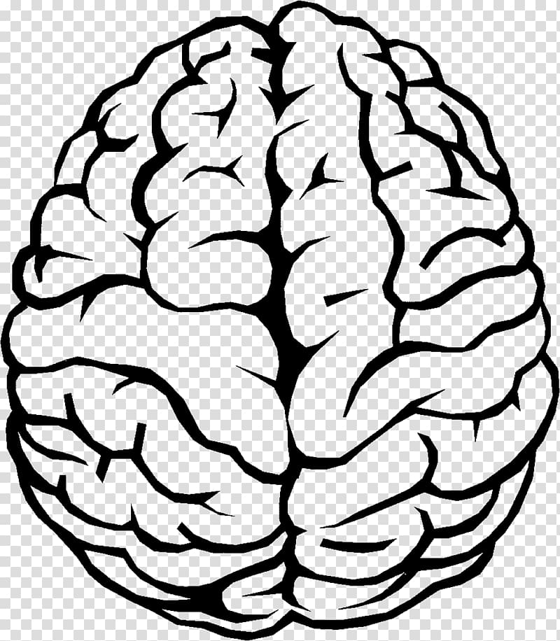 Brain illustration, Outline of the human brain , Brain.