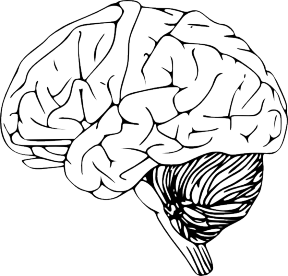Clipart Brain Transparent.