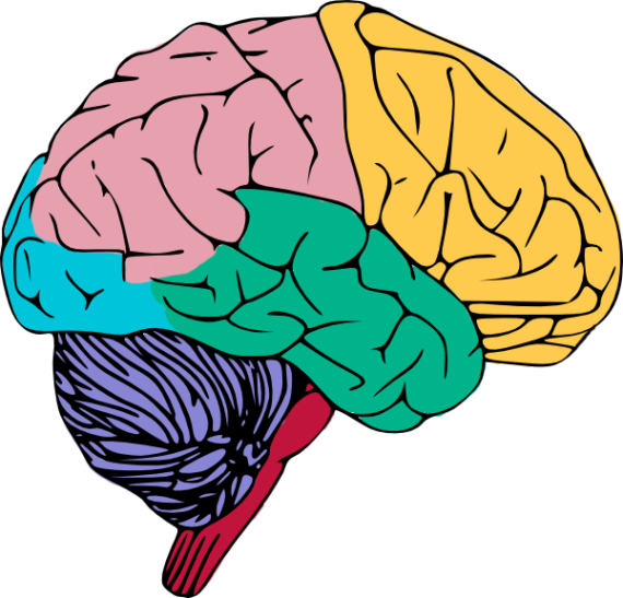 Cartoon Brain Clipart Picture.