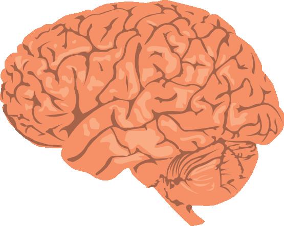 Transparent Brain Clipart.