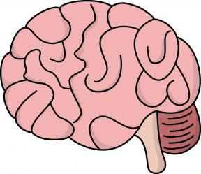 Clipart Brain Transparent.
