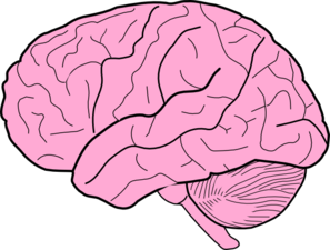 Brain Clipart Free & Brain Clip Art Images.