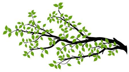 Tree branches clipart » Clipart Station.