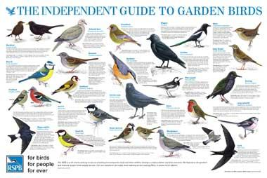 The Independent Guide to British Birdlife.