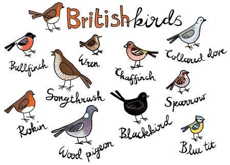 Garden Birds Drawing.