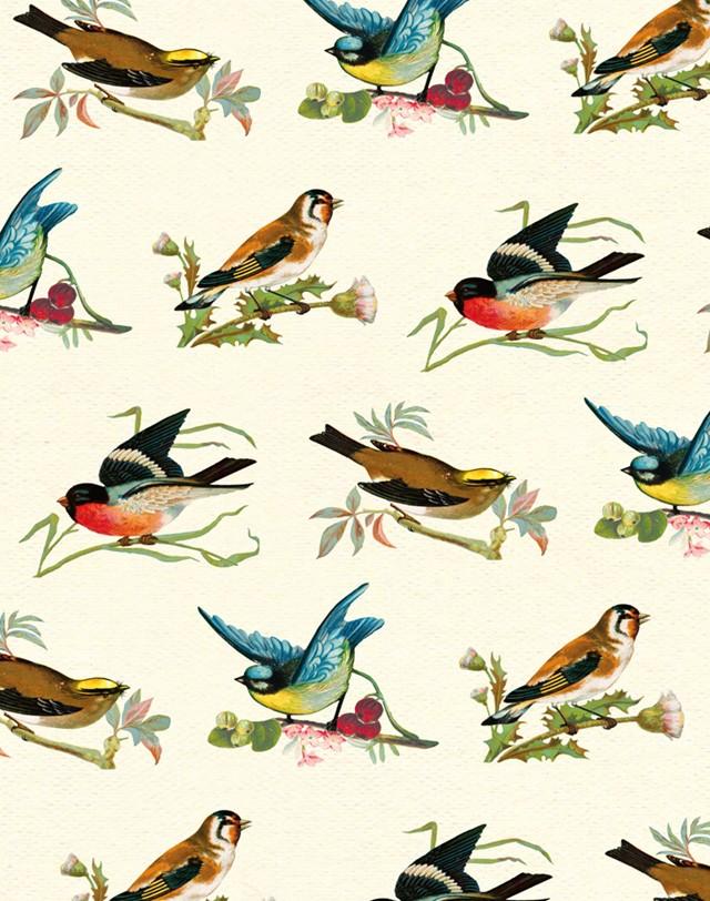 Gift Wrap » Gift Wraps » British Birds » British Birds.