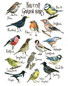 garden bird drawings.