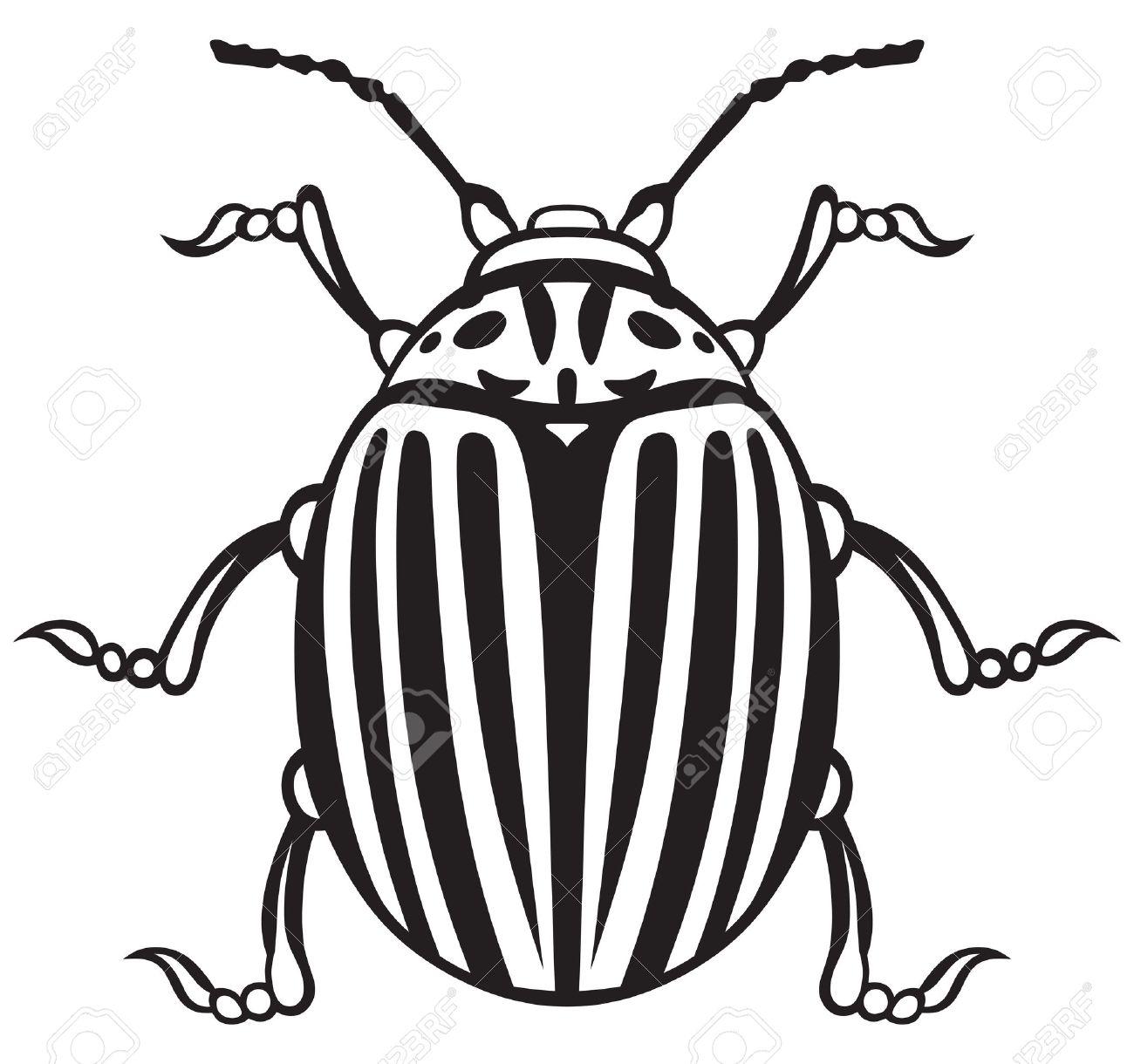 White Bug Cliparts.