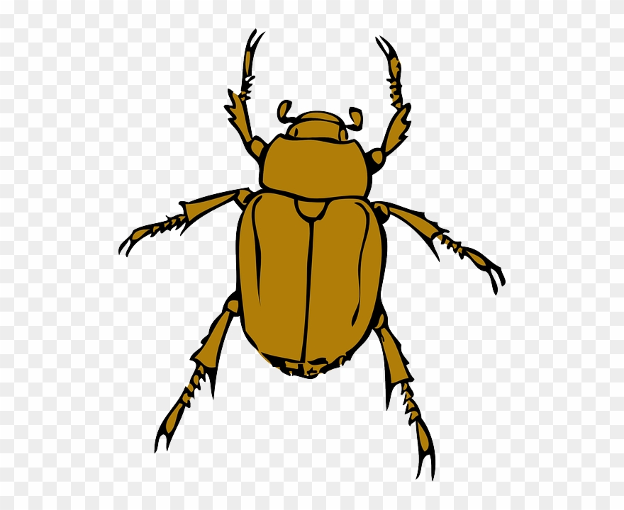 Cartoon, Bugs, Bug, Insect, Animal, Beetle, Insects.