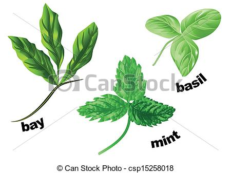 Vector Clip Art of herbs on a white.