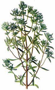 Herbs Clip Art Download.
