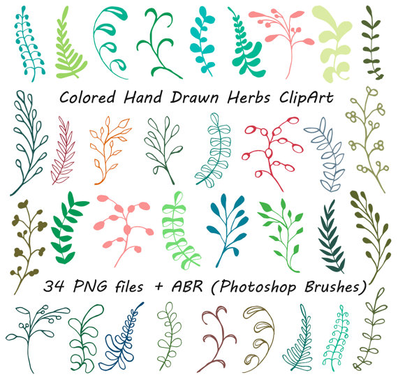 Clipart Bunch Of Herbs.