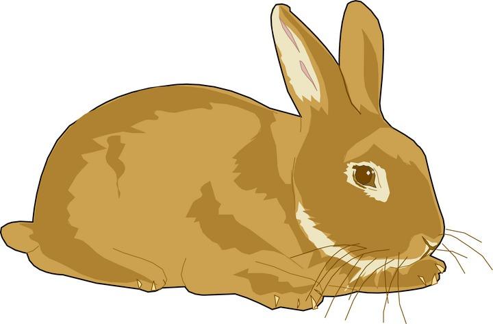 Rabbits Clip Art.