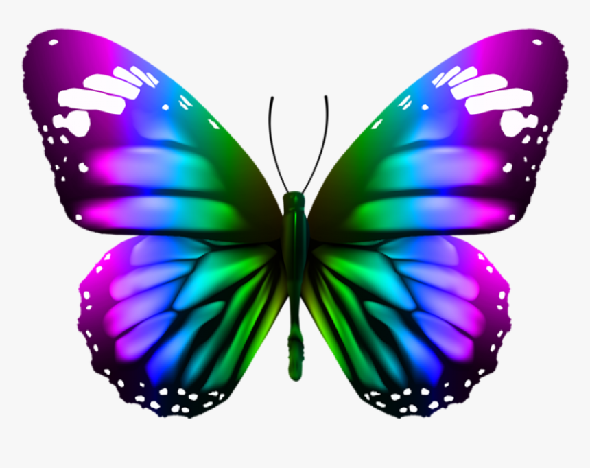 Download Butterfly Transparent Clipart Photo Top Png.