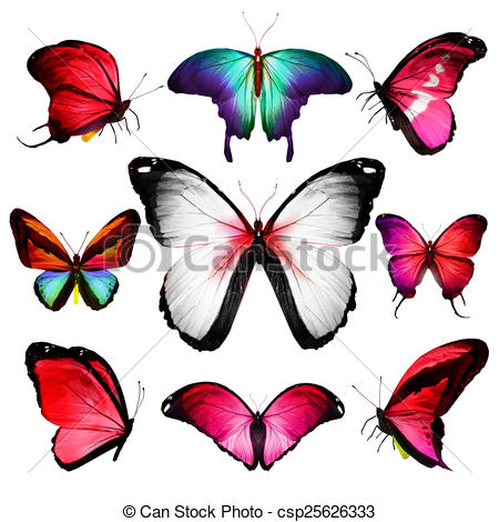 Drawings of Different color butterflies csp25626333.
