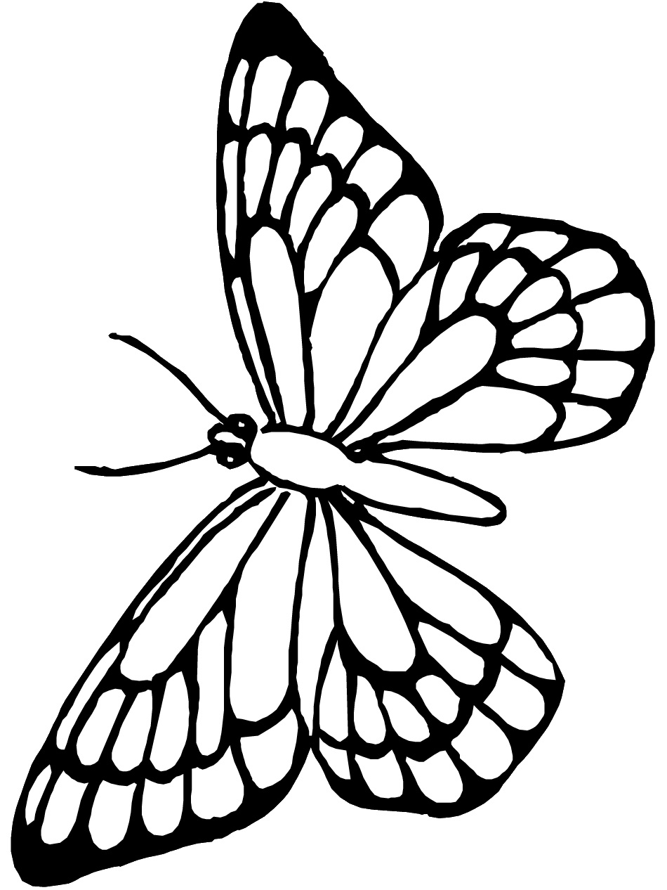 clipart butterfly outline Butterfly Drawing Outline ClipArt Best.