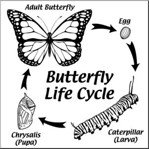 Clip Art: Butterfly Life Cycle B&W I abcteach.com.