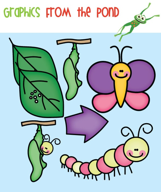 Butterfly Life Cycle Clipart.
