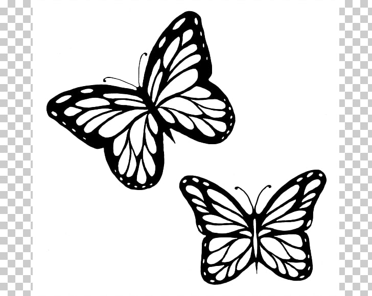 Monarch butterfly Outline Drawing , Butterflies Black And.