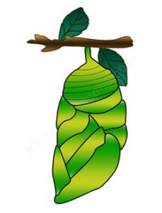 Cocoon clipart 2 » Clipart Station.
