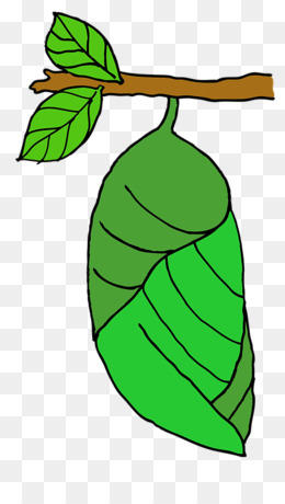 Cocoon PNG.