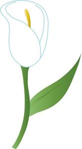 Calla lily clip art.
