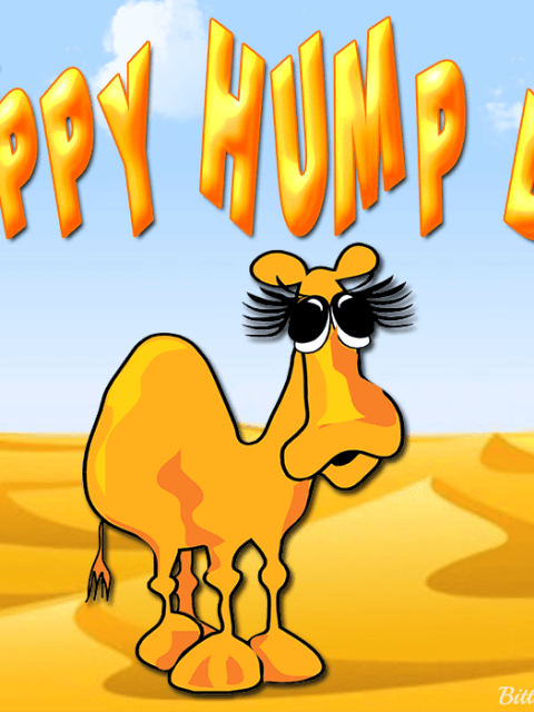 Happy Hump Day Camel.