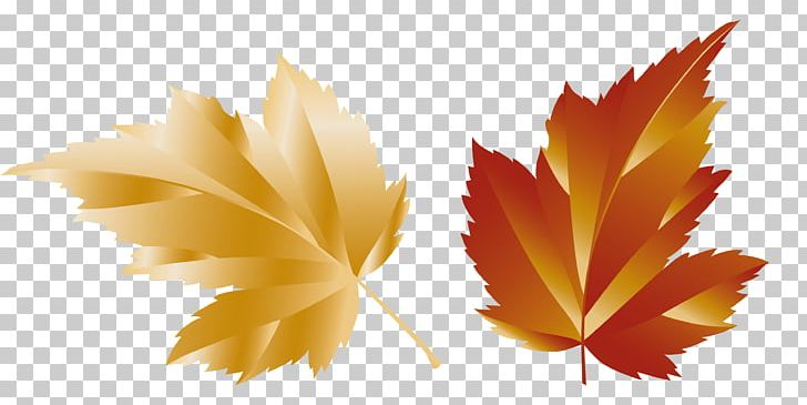 Maple Leaf PNG, Clipart, Autumn, Autumn Leaf Color, Autumn.