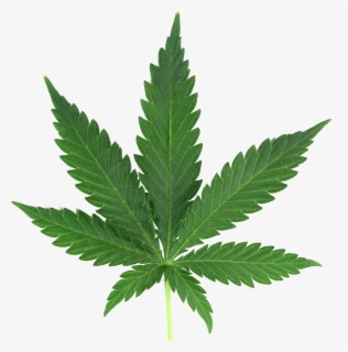Free Weed Leaf Clip Art with No Background.