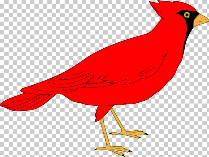 Northern cardinal St. Louis Cardinals , others PNG clipart.