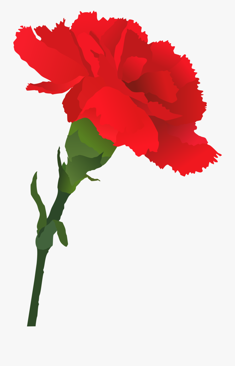 Carnation Clipart Sympathy.