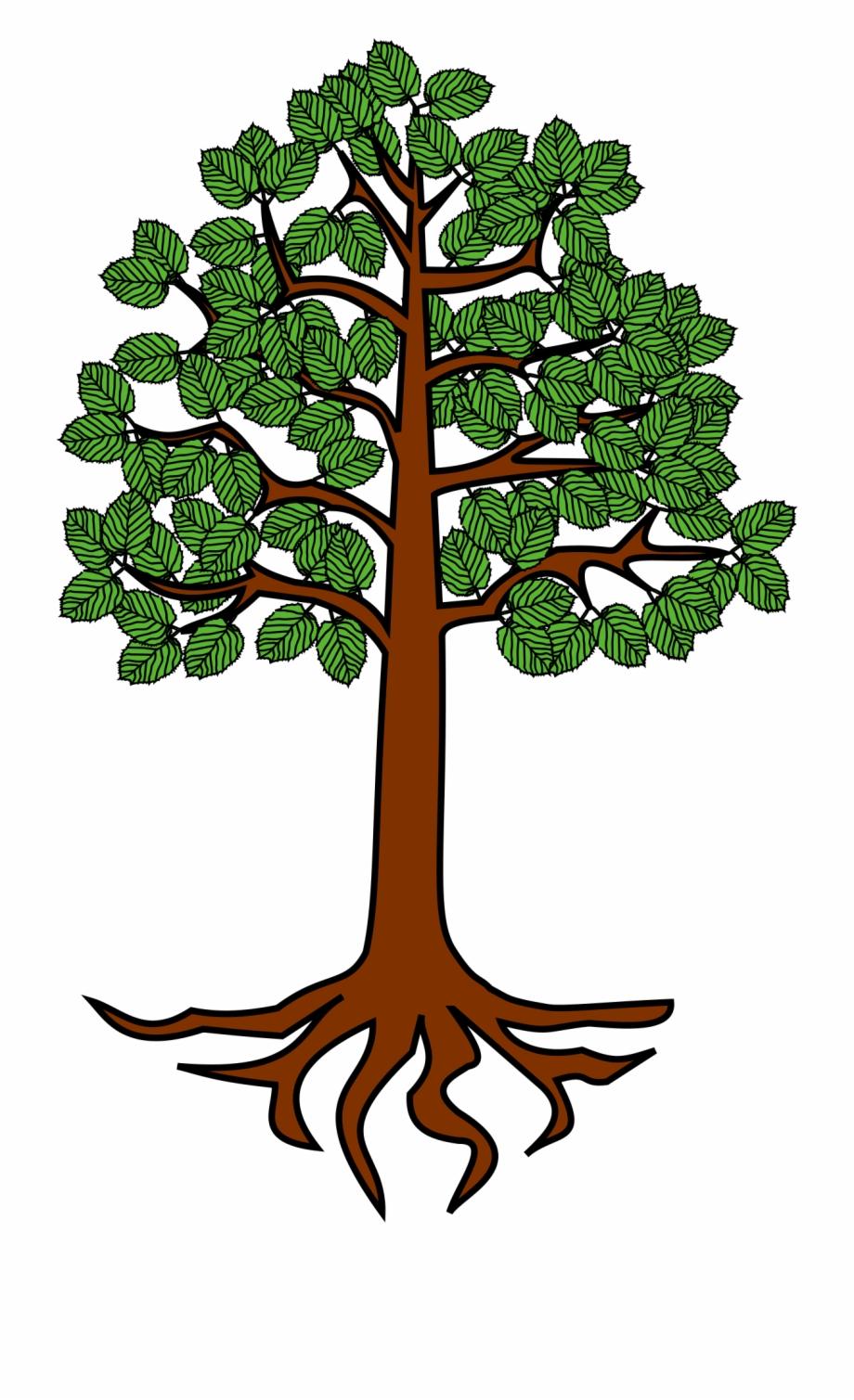 Roots Clipart Cartoon Tree.