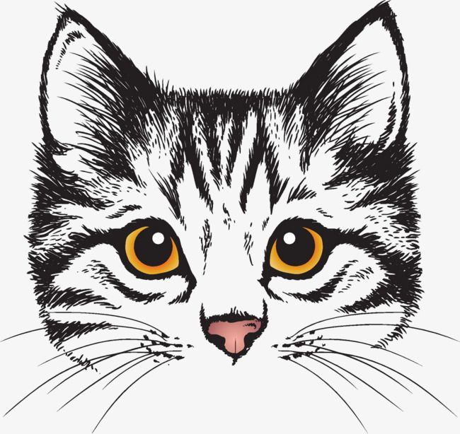 Cute Cat Head, Cute Clipart, Cat Clipart, Head Clipart PNG.