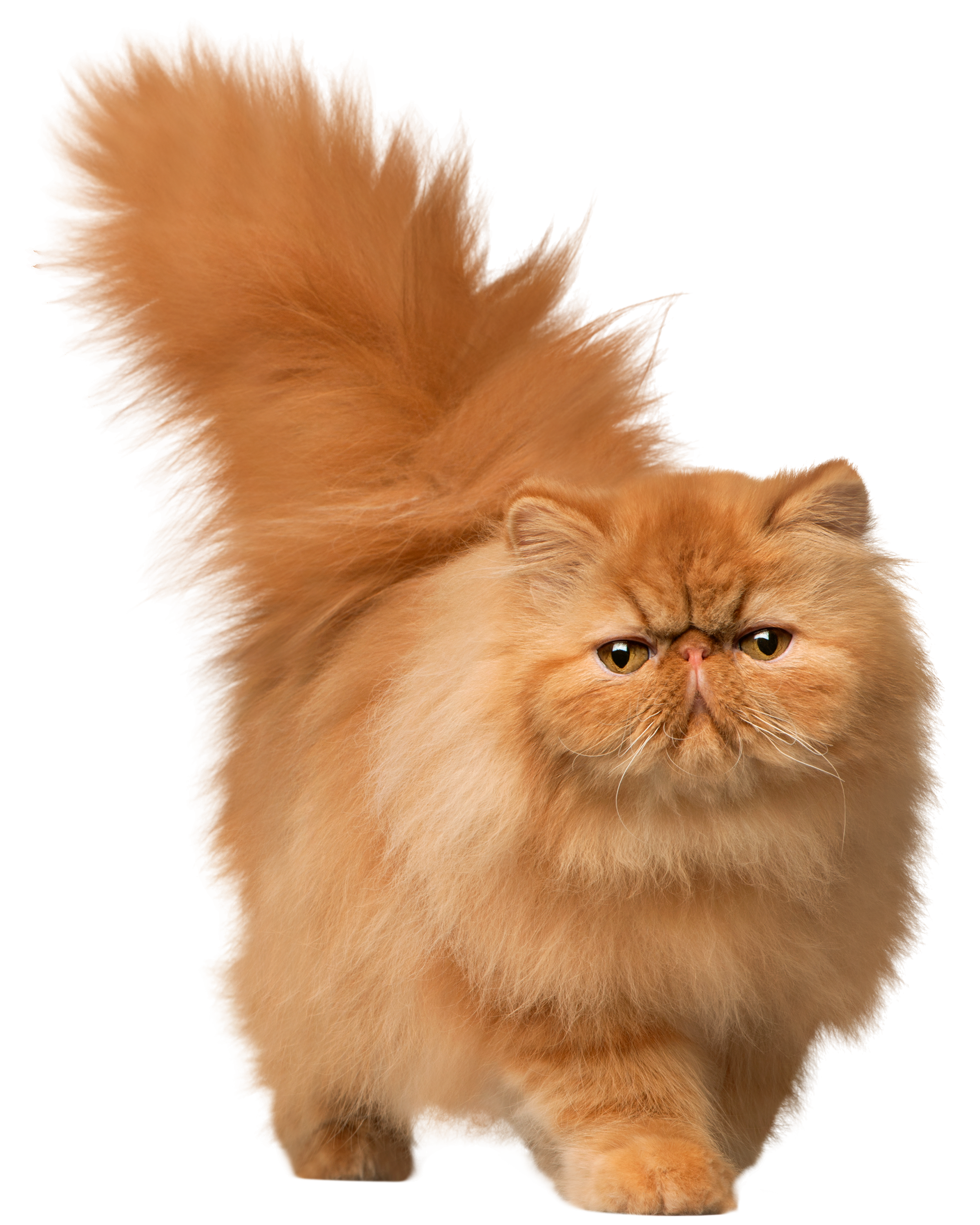 Walking Cat PNG Clip Art.