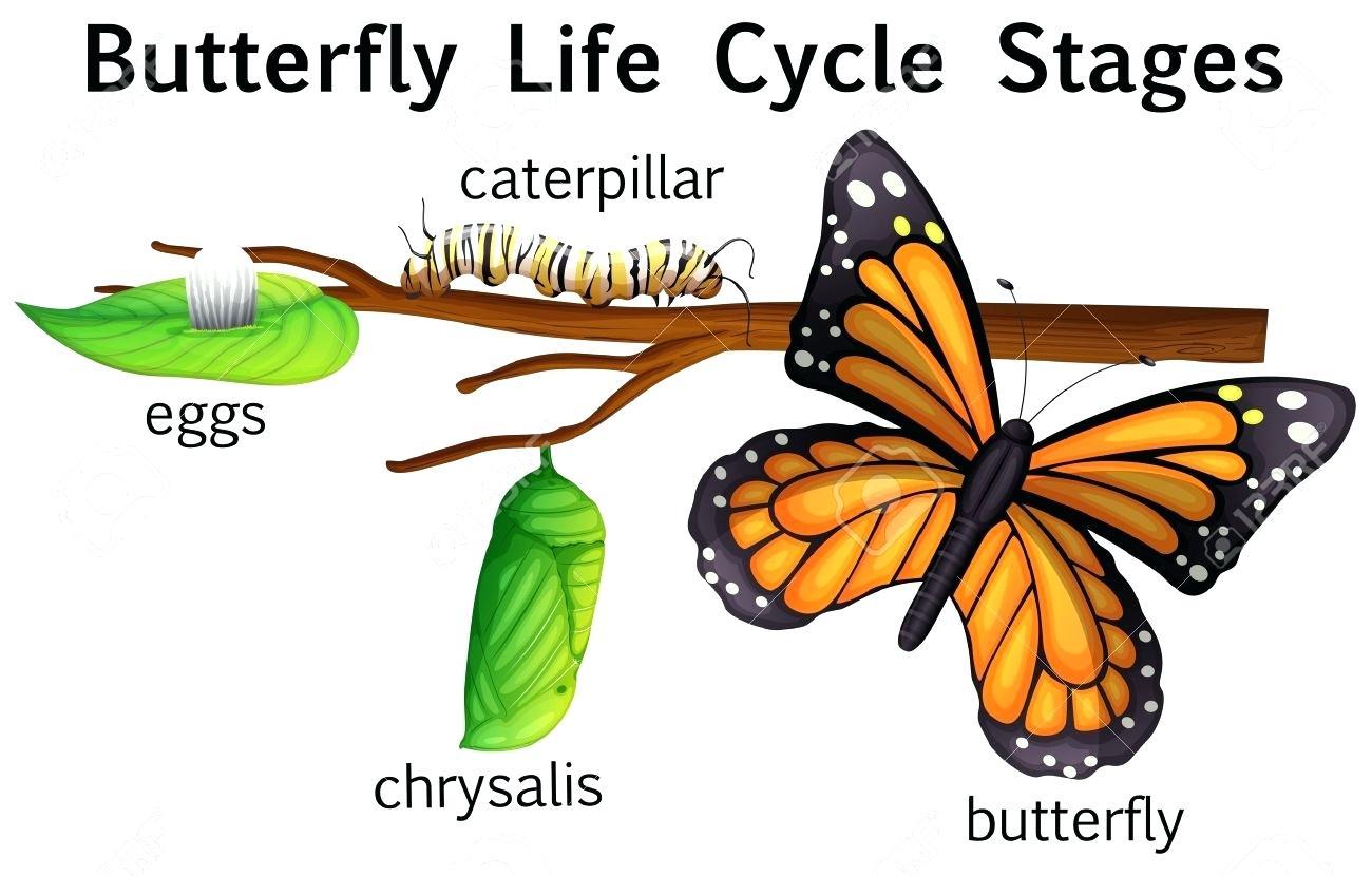 Monarch Caterpillar Clipart Clip Art Caterpillar Caterpillar.