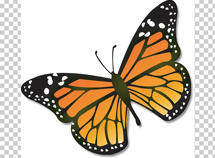Monarch Butterfly Insect Caterpillar PNG, Clipart, Animal Migration.