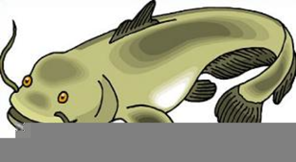 Clipart Catfish.