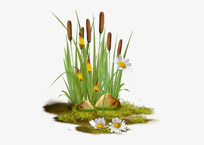 Download Free png Cattails.
