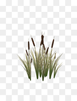 Cattail PNG.