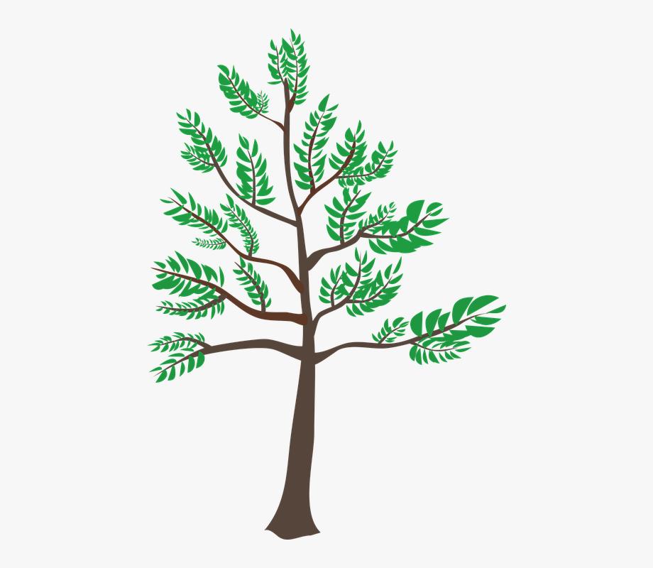 Cedar, Green, Heatwave, Leaf, Summer, Tree, Young.