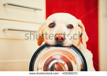 Empty Bowl Stock Images, Royalty.
