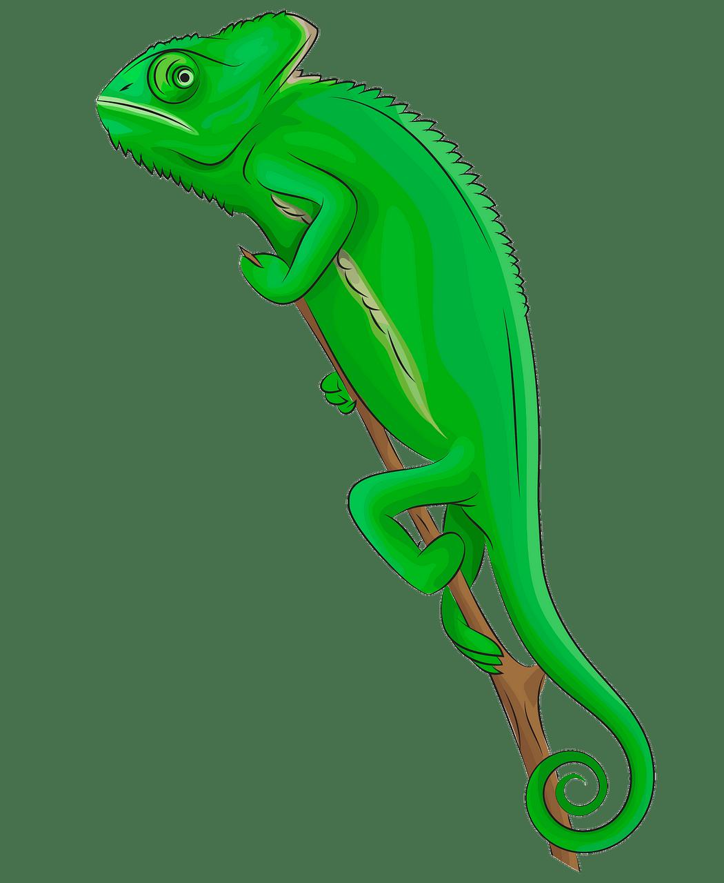 Veiled chameleon clipart. Free download..